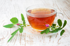 Różana modna herbata Zdjęcia Royalty Free
