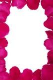 Różana płatek rama Zdjęcia Stock