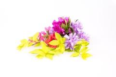 Różanecznik kwitnie skład Obrazy Stock