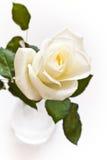 różani białych waterdrops Obrazy Royalty Free