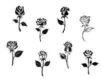 Różani kwiaty Fotografia Stock