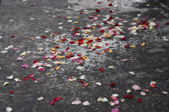 Różani płatki na popielatej powierzchni Obrazy Royalty Free