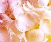 Różani płatki textured, sezony, świętowanie rocznika tło obraz stock