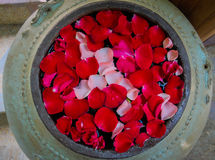 Różani płatki w kamiennym pucharze Obrazy Stock