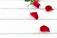 Różani płatki z wzrastali Zdjęcie Royalty Free