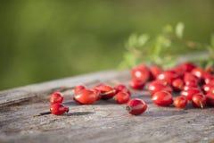 Różany biodro na drewnianym stołowym szczególe Obrazy Royalty Free