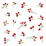 Różany biodro set ilustracji