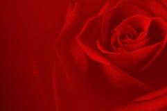 Różany carsd Obraz Stock