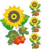 różany guldenu słonecznik Fotografia Stock