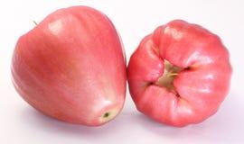 Różany jabłko Fotografia Stock