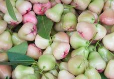 Różany jabłko na ziemi Zdjęcie Stock