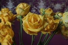 różany kolor żółty bukiet Makro- Fotografia Stock