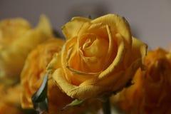 różany kolor żółty bukiet Makro- Obraz Stock