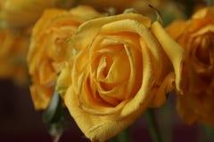 różany kolor żółty bukiet Makro- Obrazy Royalty Free