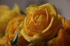różany kolor żółty bukiet Makro- Fotografia Royalty Free