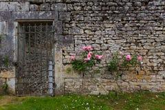 Różany krzak i drylująca ściana Fotografia Stock