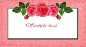 Różany kwiatu przygotowania, rama i royalty ilustracja