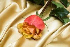 różany menchia jedwab Zdjęcia Royalty Free