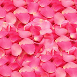 Różany płatka tło zdjęcia stock