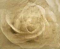 Różany rocznika tło Obraz Royalty Free