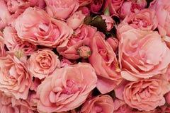 Różany tło obrazy stock