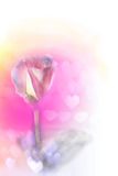 Różany tło abstrakt (Dobry dla grafiki, tapetowego i dekoracyjnego projekta,) Obrazy Royalty Free