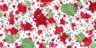 Różany tło (na bielu) Obraz Royalty Free