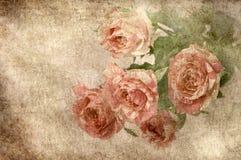 różany tło rocznik Fotografia Royalty Free