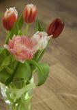 Różany tulipanowy zakończenie Obrazy Stock
