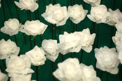 Różany valentines dzień Zdjęcie Stock