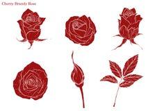 Różany wektorowy ustawiający ręka rysunkiem ilustracji