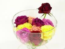 róże Zdjęcia Royalty Free