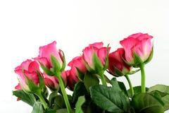 Róże barwić Zdjęcie Stock