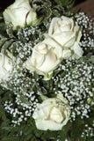 róże biały Fotografia Royalty Free