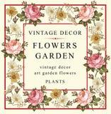 Róże, chamomile również zwrócić corel ilustracji wektora Obrazy Royalty Free