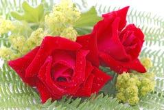 Róże i damy salopa zdjęcie royalty free