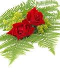 Róże i damy salopa zdjęcie stock