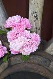 Róże i furgonu koło Zdjęcia Royalty Free