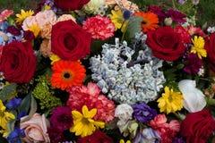 Róże i inny kwitną Fotografia Royalty Free