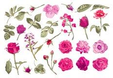 Róże i liście ustawiający Zdjęcia Royalty Free