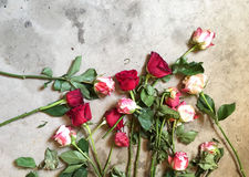 Róże Kłaść na szarość betonu podłoga Obrazy Royalty Free