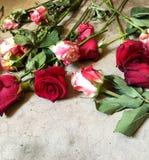 Róże na betonowej podłoga Zdjęcie Stock
