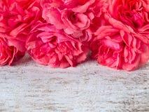 Róże na białym nieociosanym tle fotografia royalty free