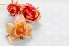 Róże na kropkowanej błękitnej tkaninie Obrazy Stock