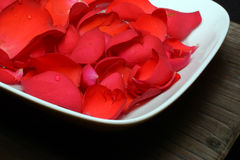 Róże na półkowym tła zbliżeniu Obrazy Royalty Free