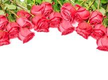 Róże Odizolowywać na Białym tle Fotografia Stock