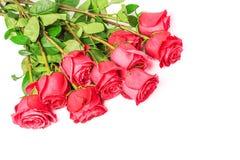 Róże Odizolowywać na Białym tle Obrazy Stock