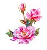 Róże odizolowywać na bielu, obraz olejny ilustracji