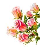 Róże odizolowywać na bielu, obraz olejny Obraz Stock