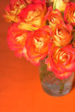 róże pomarańczowe Fotografia Royalty Free